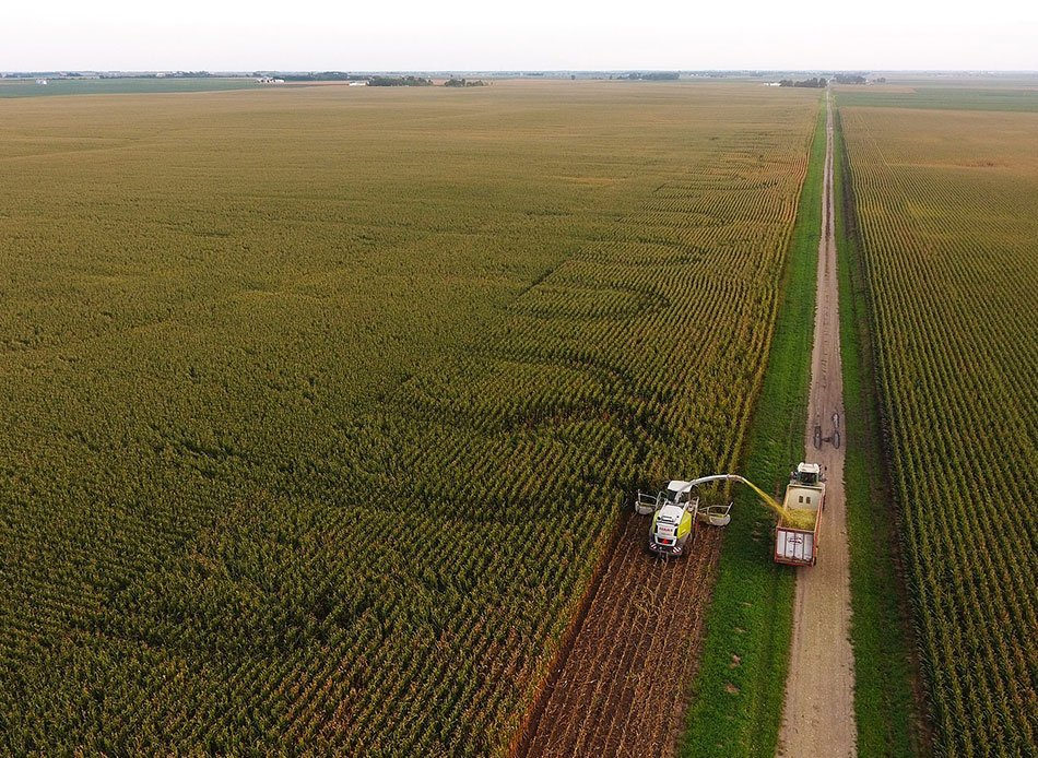 Recent research studies on corn silage